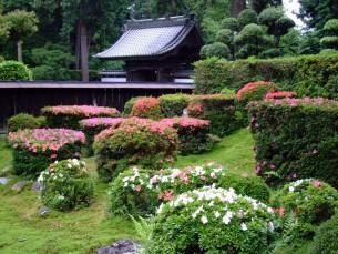 庭園 客殿南側 開花時