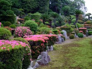 庭園 客殿西側 開花時
